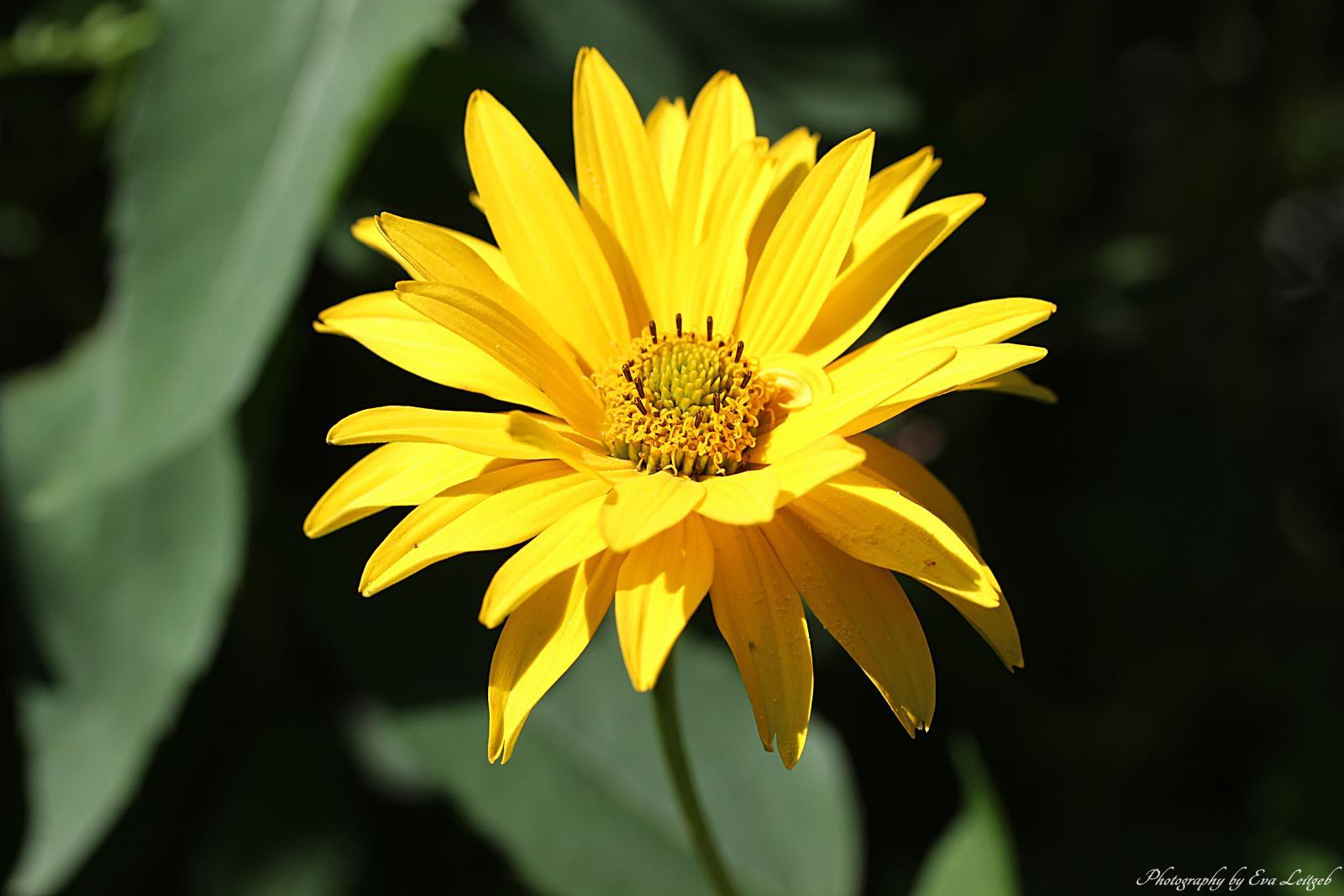 Welche Blumen Blühen Im September s welt september blumen im garten