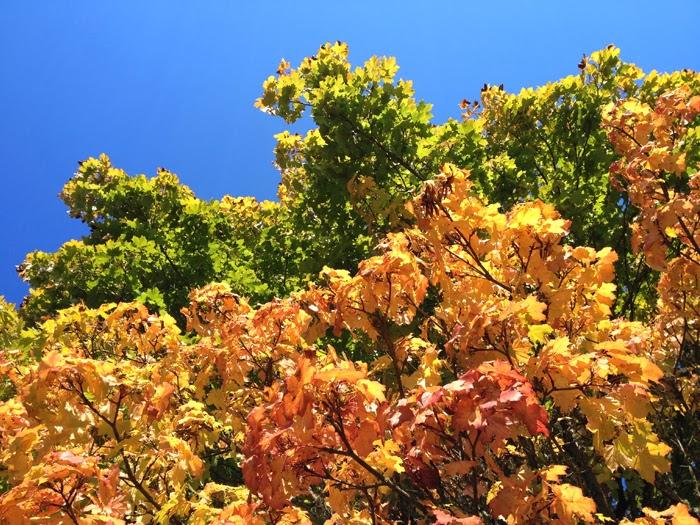 Rainbow Leaves on a tree in Oregon