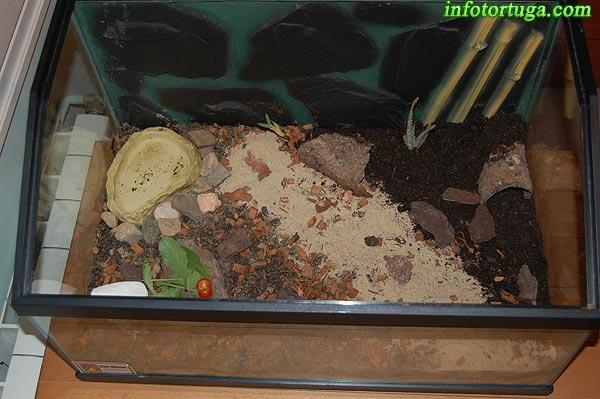Un zoo en casa terrario para cr as de tortugas terrestres - Como construir un terrario ...