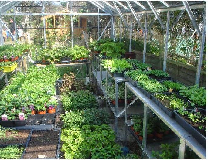 Desain Rumah Kaca Ramah Lingkungan sering kali digunakan untuk mengembangkan bunga buah dan tanaman tembakau. Lebah bumble adalah polinator pilihan untuk ... & Desain Rumah Kaca Ramah Lingkungan   Rumah Minimalis Sederhana