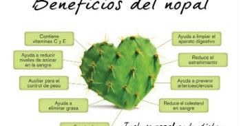 Licuado de nopal para el estre imiento nutricion y bienestar for Informacion sobre el cactus