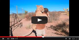 No podrás creer lo que este león hace a un hombre que lo libera de su jaula.