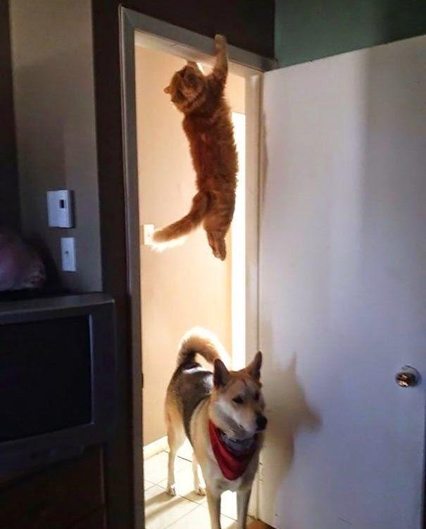 Kucing Modern yang Memiliki Keahlian Ninjutsu