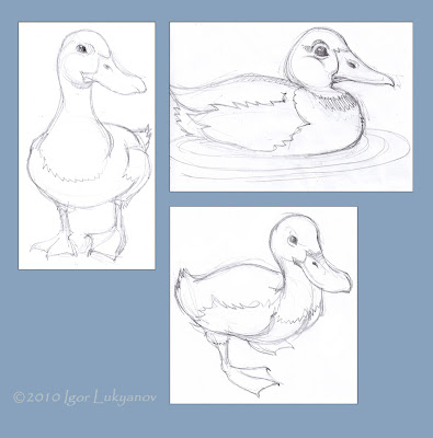 pencil sketches of ducks