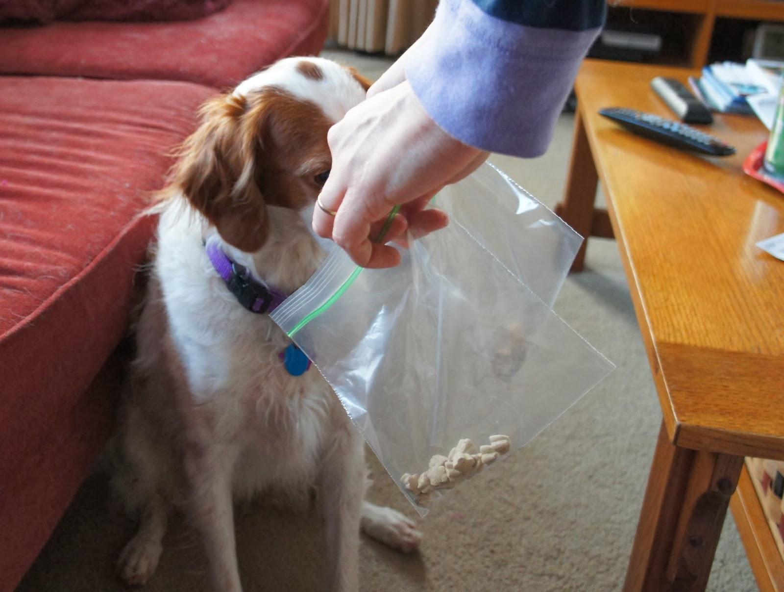 Tricky Treats Dog Treats