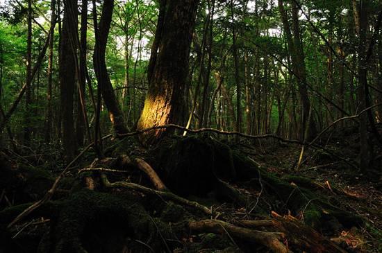 aokigahara-hutan-tempat-membunuh-diri