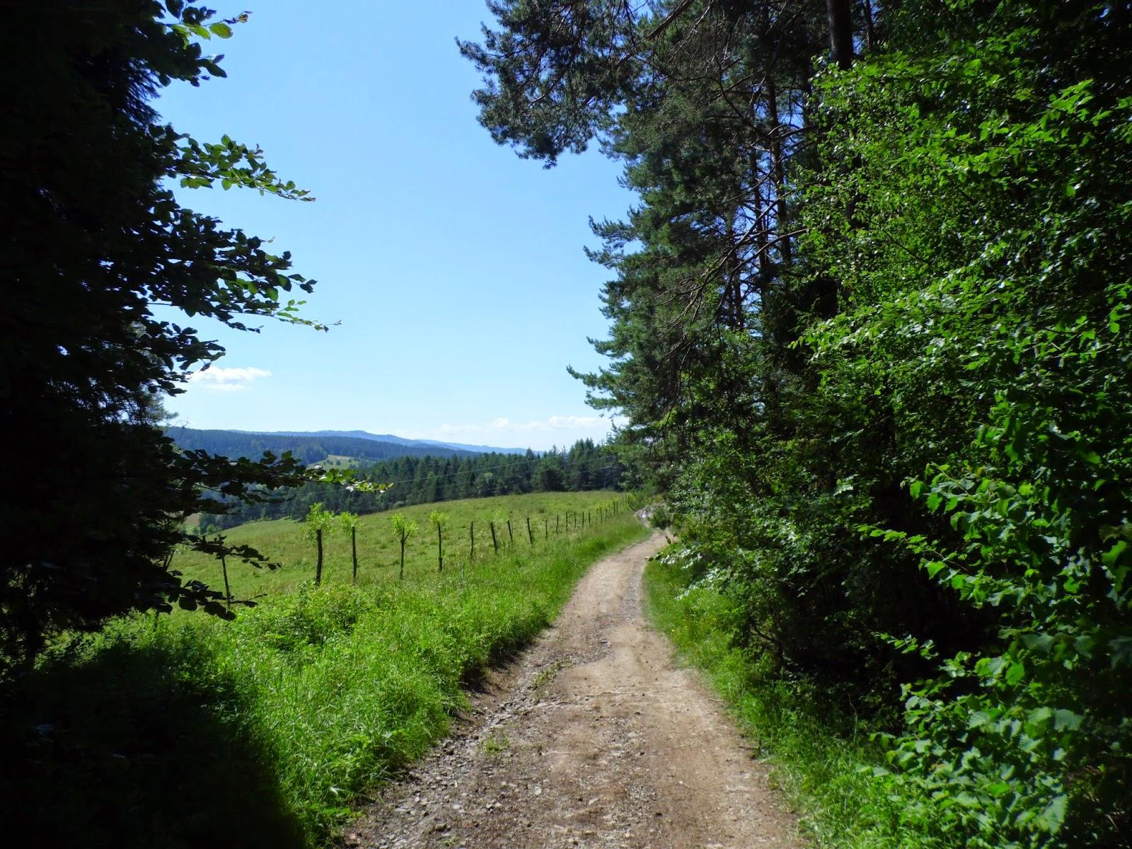 Początek lasu przy szlaku z Muszyny na Jaworzynę Krynicką