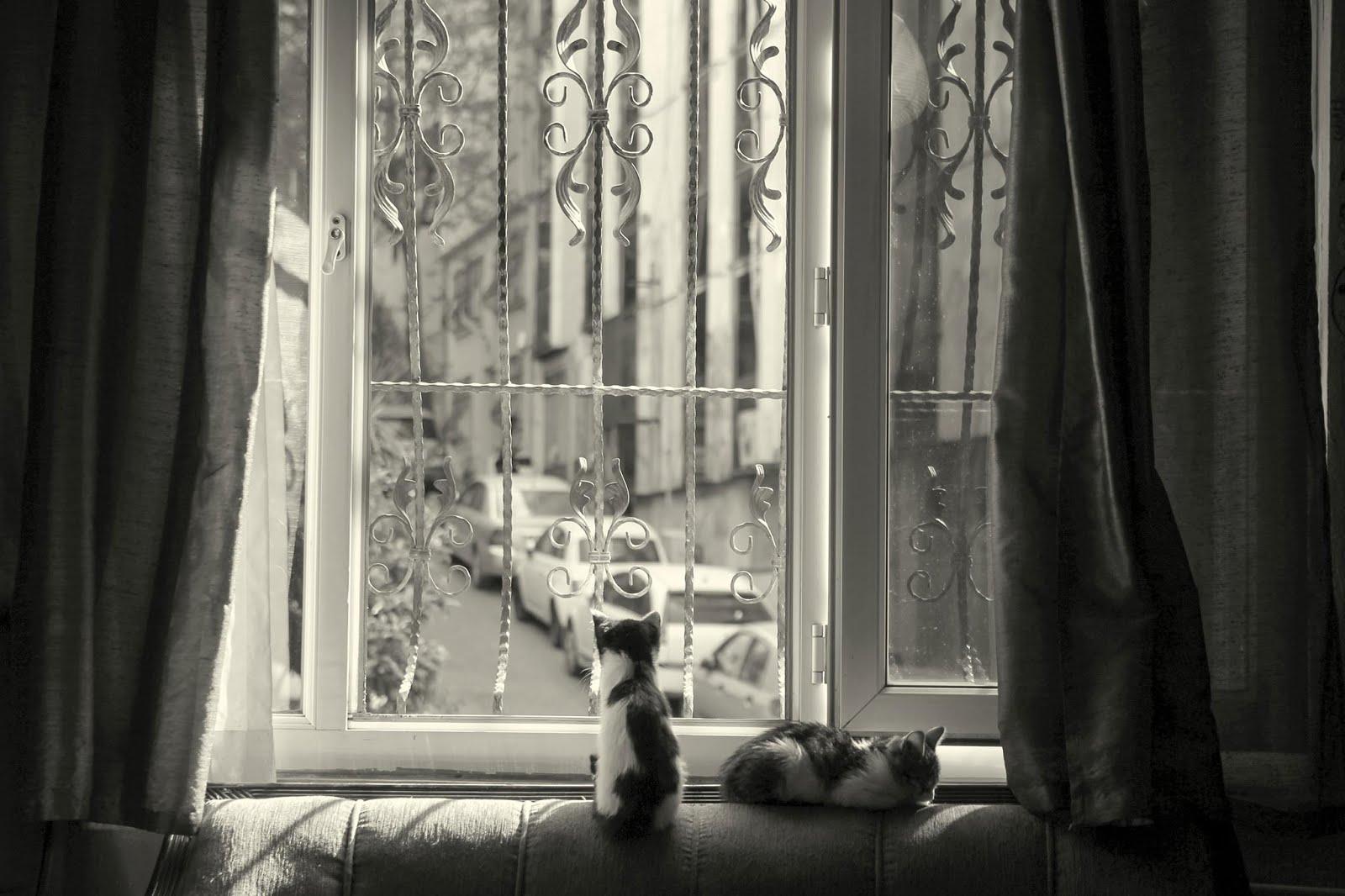 stray cat hostel