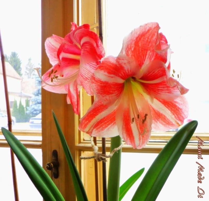 Indoor Plants - Zimmerpflanzen