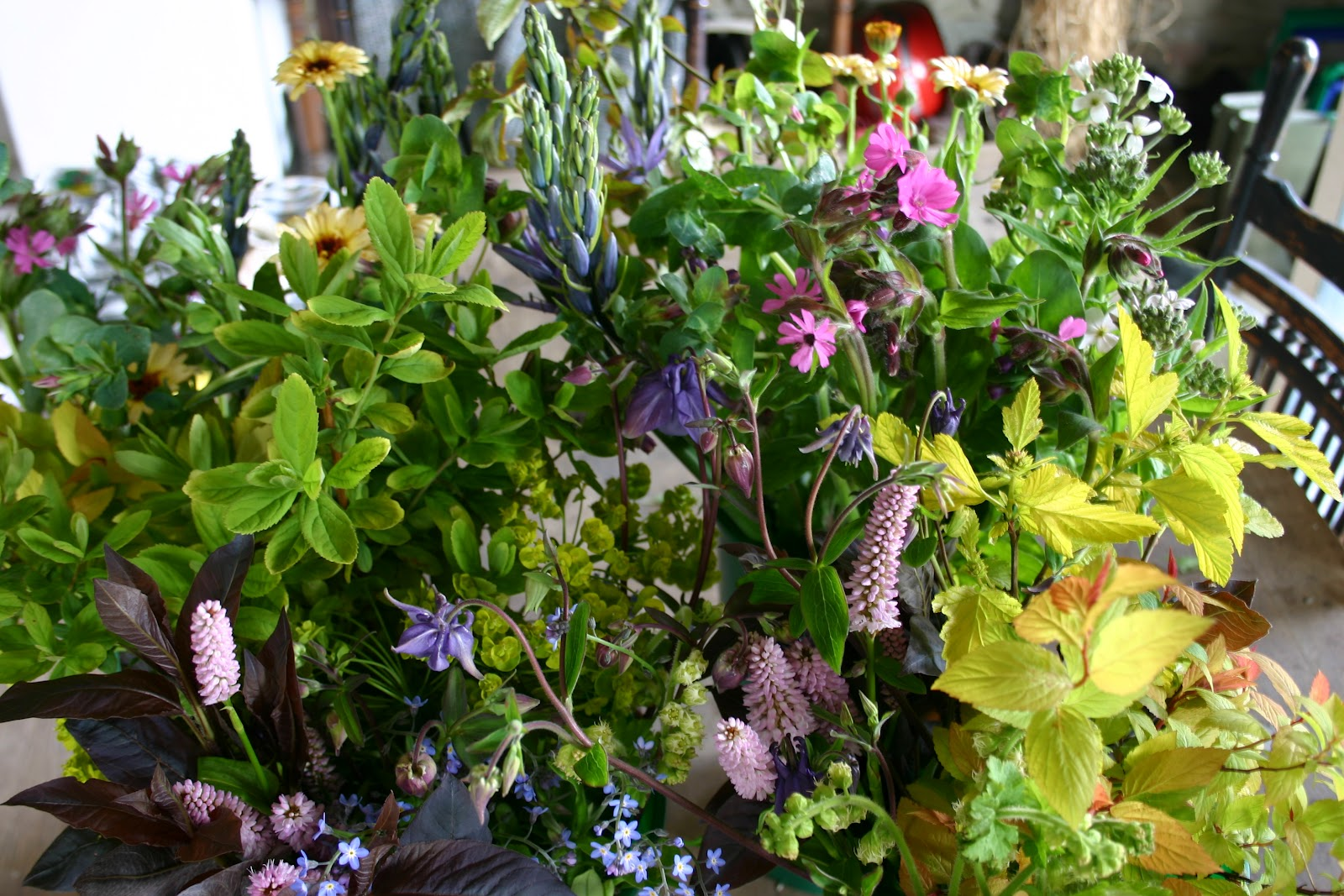 Flaars Today Common Farm Flowers The Flower Farmer British