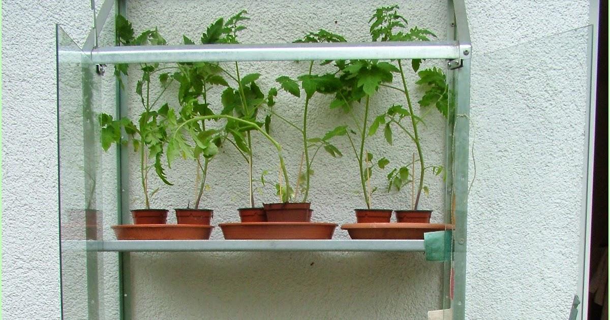 die krautgarten manufaktur tomaten erstselektion. Black Bedroom Furniture Sets. Home Design Ideas