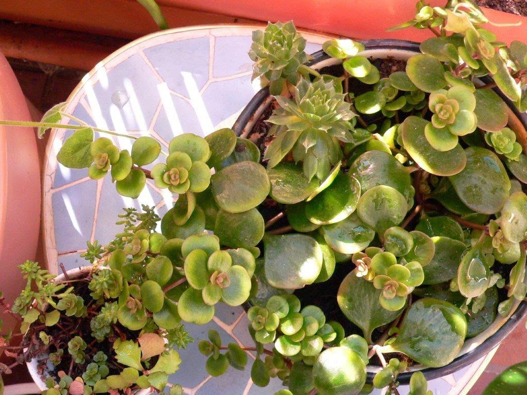 Herbst Altweibersommer Balkon Balkonien sonnig Blumen Blüten