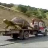 Kura kura terbesar didunia