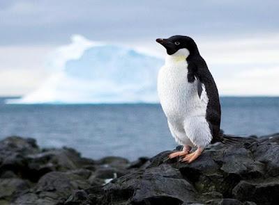 اجمل صور حيوانات غريبة  صورة بطريق