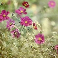 cudowne kwiaty :)