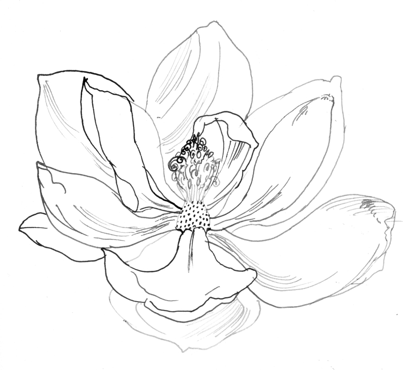 Magnolia Flower Line Drawing : The painted blackbird march