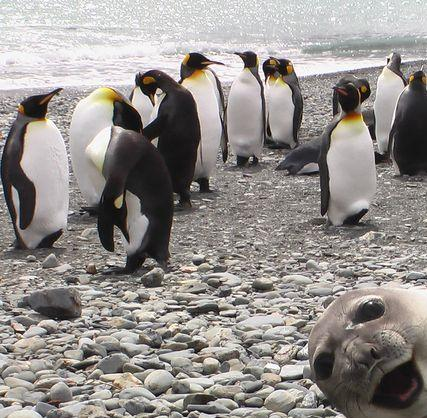 Funny Penguin Photo Bomb Seal