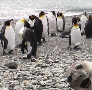 Funny Penguin Photo Bomb Seal