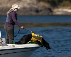 Dog Assists Biologists in Tracking Endangered Whales