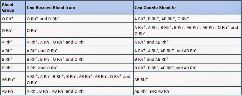 prosedur transfusi darah