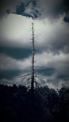 Nature's Obelisk