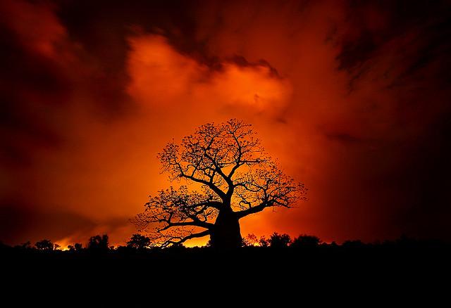 baobam w ogniu