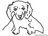 Mewarnai Gambar Anak Anjing