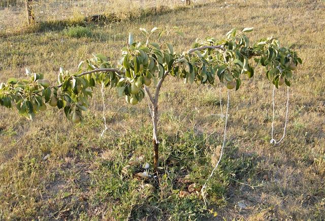 как выращивать деревья