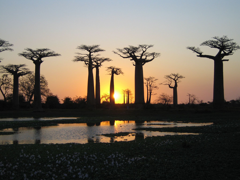 wallpaper tree baobab africa-#10