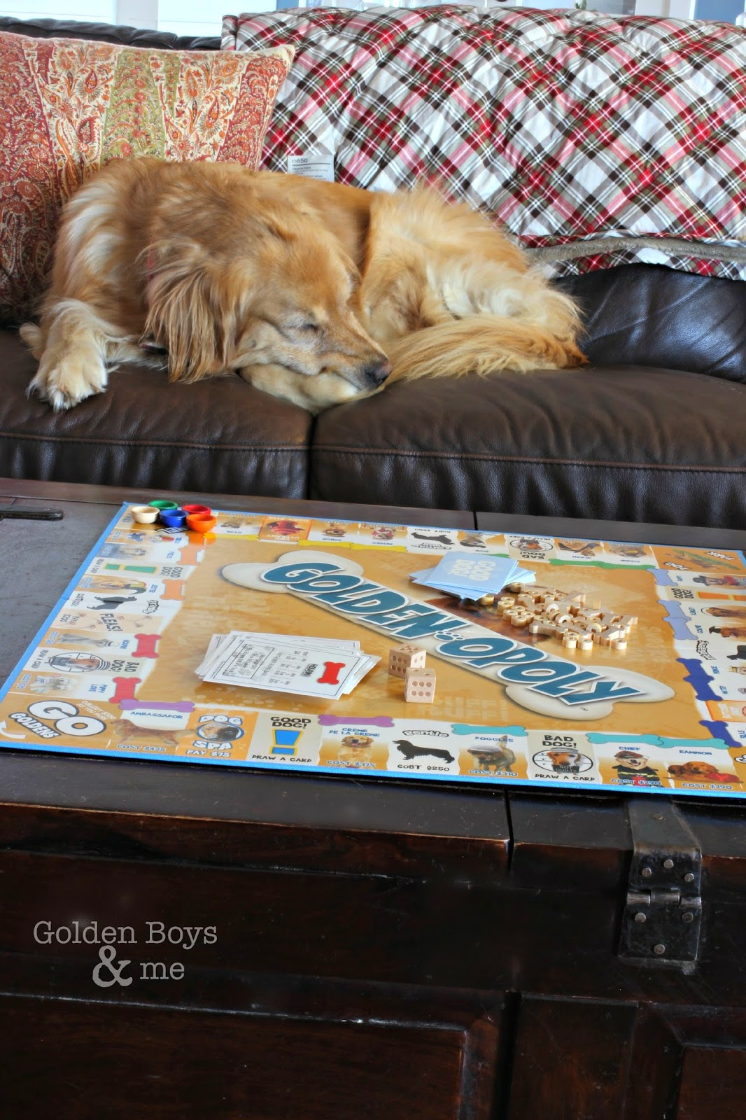 Golden retriever sleeping on brown leather sofa by Golden-poly game-www.goldenboysandme.com