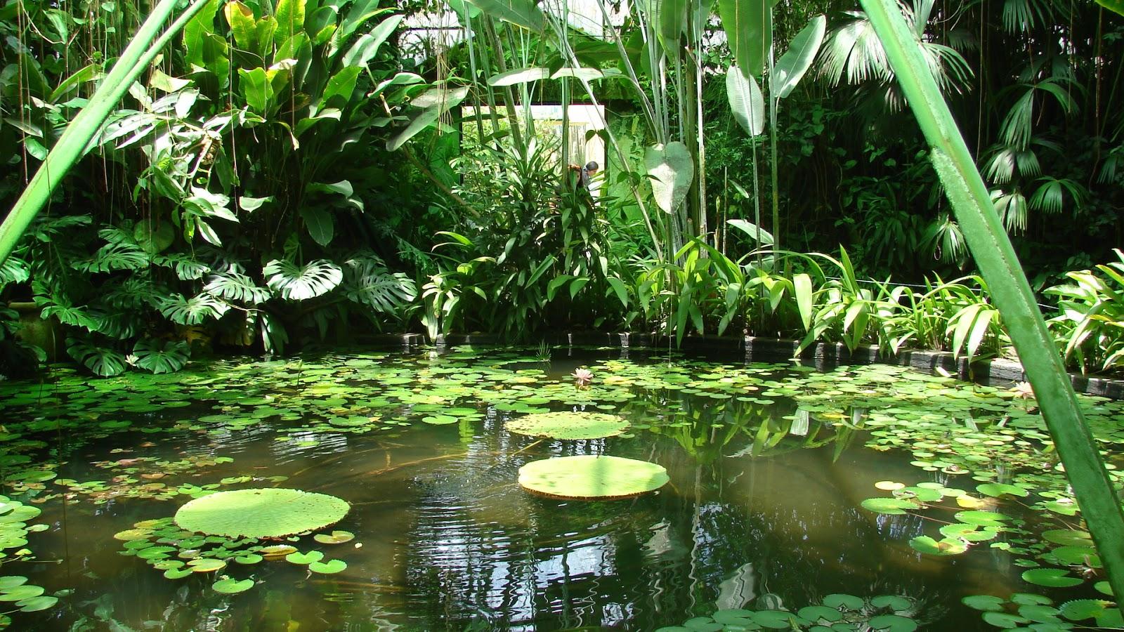 Paisajismo pueblos y jardines el jard n bot nico jos for Jardin botanico de berlin