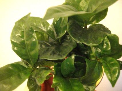 C 39 est parti mon kiki faites le plein d 39 nergie positive for Plante 9 feuilles