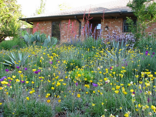 Landscaping With Native Plants : Casual casa natural landscaping with native plants