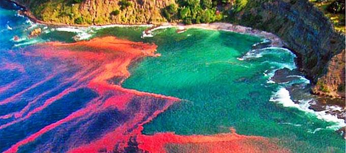 Marea roja ¿naturaleza o ficción?