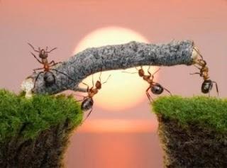 fakta menarik tentang semut
