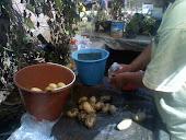 Durante la preparación de tortillas de papa