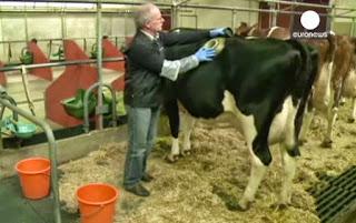 Βίντεο ΣΟΚ..Άνθρωποι τέρατα ταΐζουν τις αγελάδες από βαλβίδα στο στομάχι,σαν να γεμίζουν αυτοκίνητο!
