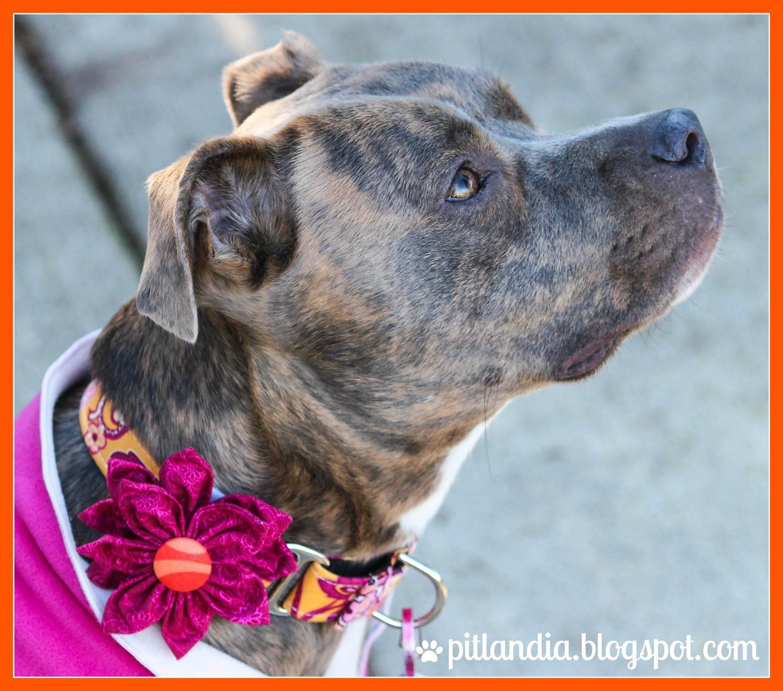 Dog Collar Flower Tutorial