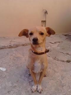 Βρέθηκε σκυλάκι στην περιοχή του Κόκκινου Μύλου. Το αναζητά κανείς?