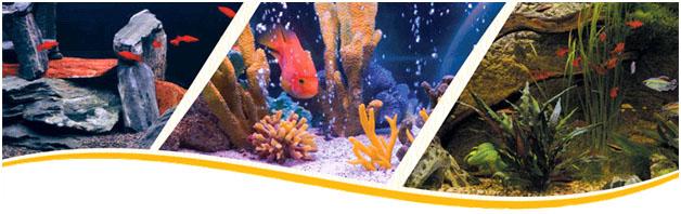 аква лого на соколе: