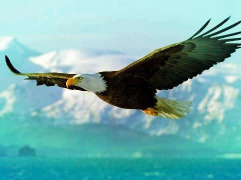 """""""Ele te cobrirá com as suas penas, e debaixo das suas asas te confiarás."""""""