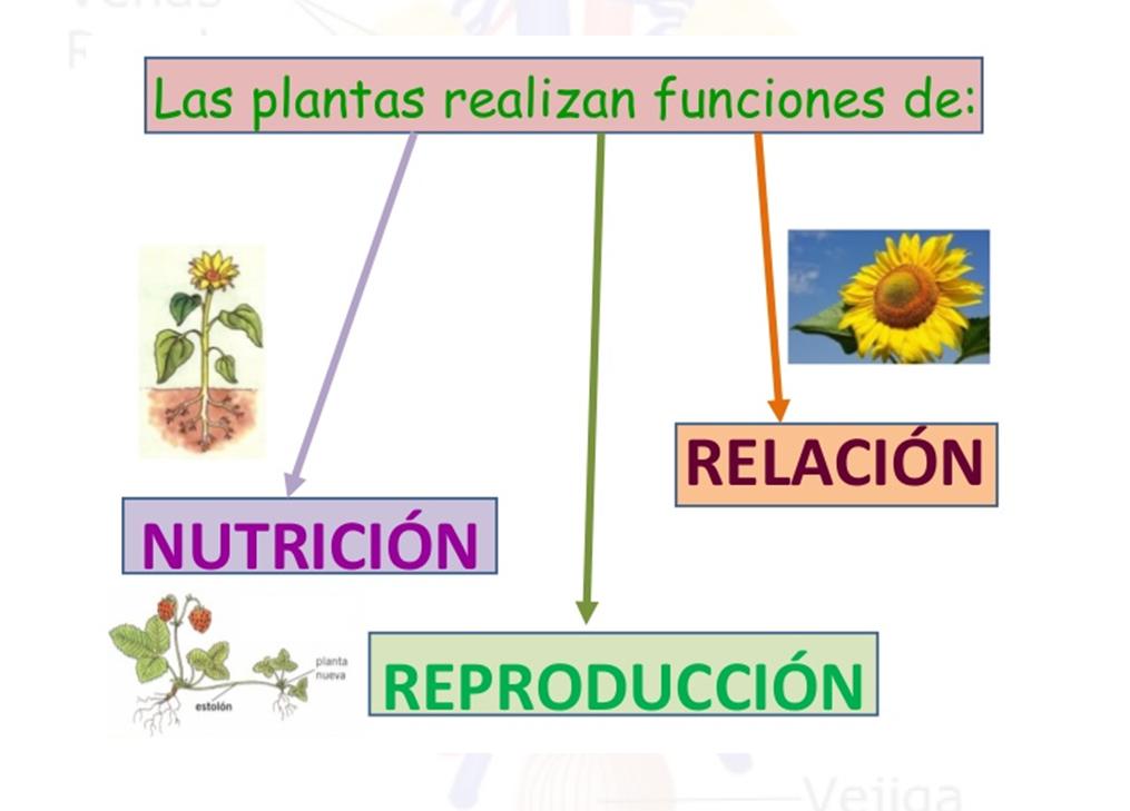 Ciencias naturales y educaci n ambiental funci n de for Funcion de las plantas ornamentales