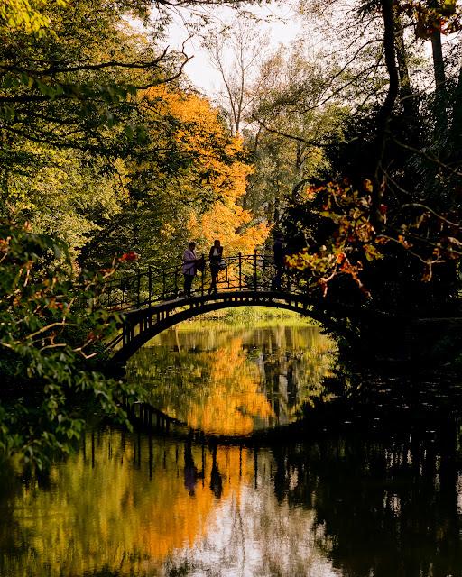 Fotografia krajobrazu. Park w Pszczynie jesienią. fot. Łukasz Cyrus, Ruda Śląska
