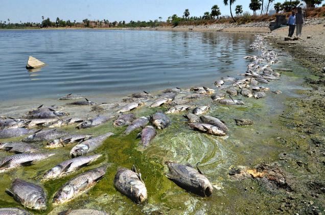 Almost 200 tonnes of dead fish reported due to heat and extreme weather in the last couple of day's