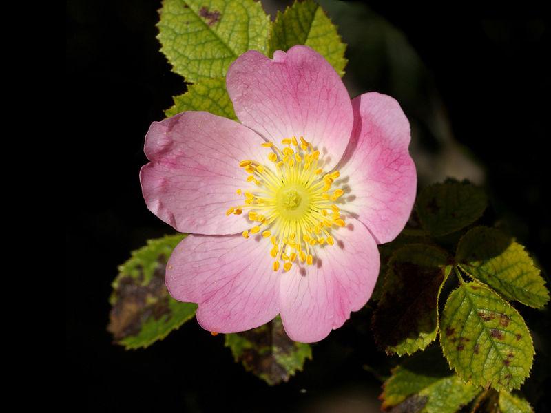 Tipos de flores vamos hablar de las rosas - Clase de flores y sus nombres ...