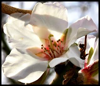 A macro shot of a wild flower