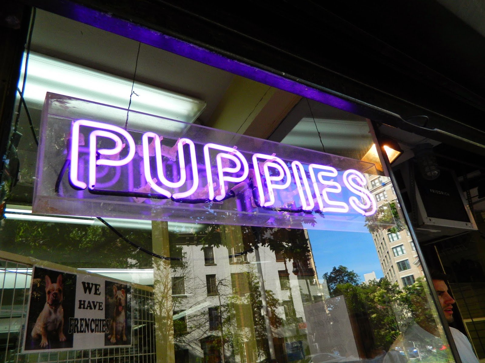 new york city chelsea puppies neon sigh purple reflection