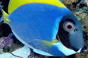 Fish N Tips October 2012