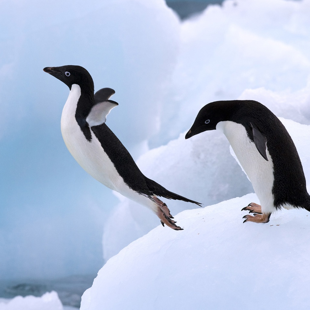 http://4.bp.blogspot.com/-cGwPyEMdW3c/UQiZWvUwmWI/AAAAAAAAW8Q/RB7xPWU5anY/s1600/Jumping-Penguins-iPad-wallpaper-ilikewallpaper_com.jpg