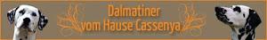 Dalmatiner vom Hause Cassenya